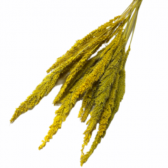 Dried Pinion Grass Yellow Bunch, 10 stelen