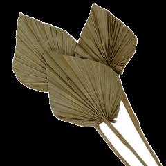 Palm spear naturel, 3 stuks