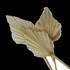 Palm spear gebleekt, 3 stuks