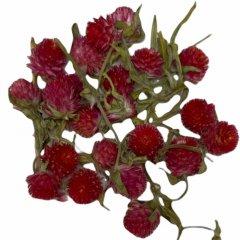 Losse bloemhoofdjes daisy Framboos kleur, 24 stuks