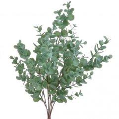 Bundel Eucalyptus Cinerea, lichte groene kleur, 42cm