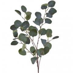 Eucalyptus Populus tak, 92cm