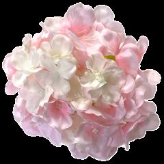 Creme en lichtroze hortensia, 18cm