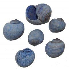 Blauwe Nattahi, 12 stuks, 4cm