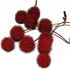 Plataanballetjes rood, ongeveer 4cm groot dit seizoen