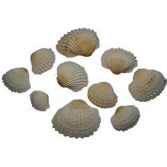 Witte schelpen, chippie, 3-4cm, 100 gram