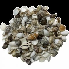 Schelpenmix, medium, 100 gram
