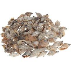 Mitra Strombus Urcues, 1 kilo