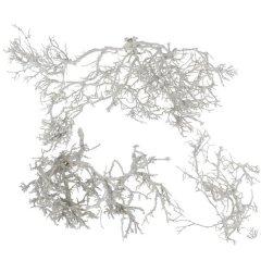 Gedroogde bonsai takken, Iron bush Dried wit, 3 takken