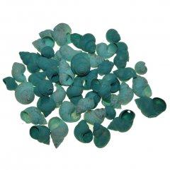 Turquoise Umachi schelpen, 50 gram