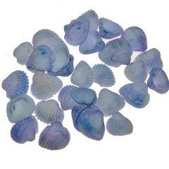 Lichtblauw-paarse schelpen, chippie, 2-3cm, 100 gram