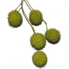 LAATSTE! Plataanballetjes appelgroen, 3cm
