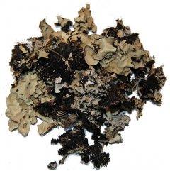 Korstmos, Musgo naturel, 40 gram