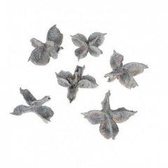 Gebleekte Cotton pods, 25 gram