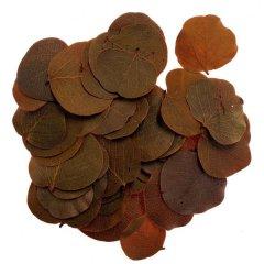 Moneta oranje 15gram