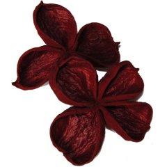 Lotusflower wijnrood, 3 á 4 stuks