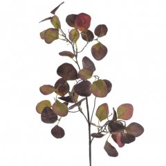 Eucalyptus populus, bordeaux-groene tinten  70cm