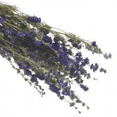 Gedroogde Delphinium blue