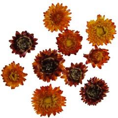 Gedroogde Helichrysum Oranje, losse bloemen, 10 stuks