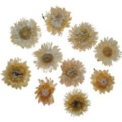 BINNENKORT WEER OP VOORRAAD! Gedroogde Helichrysum creme, losse bloemen, 10 stuks