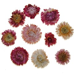 Gedroogde Helichrysum roze, losse bloemen, 10 stuks