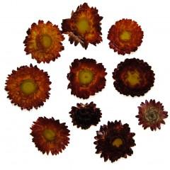 Gedroogde Helichrysum Donker Oranje, losse bloemen, 10 stuks
