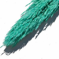 Pampasgras Cana Silvestre Turquoise, 90cm