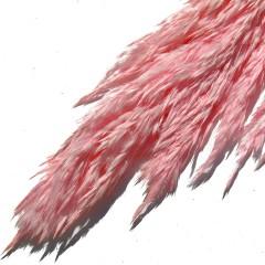 Pampasgras Cana Silvestre Lichtroze, 90cm
