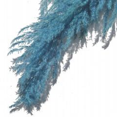 Pampasgras Zeebries Blauw, 100cm