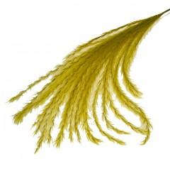 Stipa Feather Okergeel