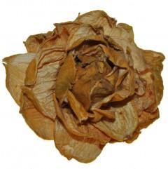 Droogbloem Landlotus okergele pioen, 10cm