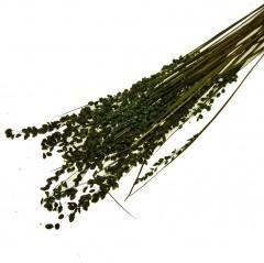 Stargrass, zeegras Olijfgroen
