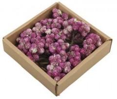 Daisy Purple: Possy on wire, white-wash