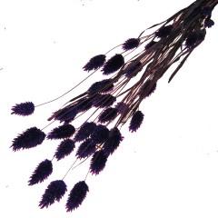 Gedroogde Paars Phalaris , 50cm