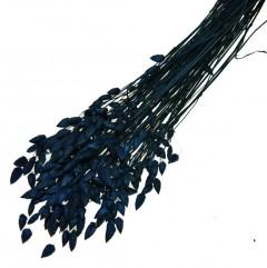 Briza Maxima Kobaltblauw