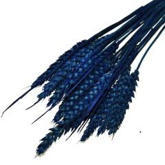 Triticum, bundeltje Kobaltblauwe tarwe van 18-20 stelen