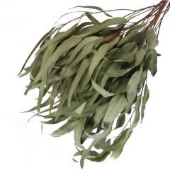 Euca Leaves Natural 50cm