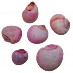 Roze Nattahi, 4cm