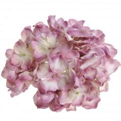 Hortensia oud-lila roze, 16cm