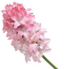 Hyacint lichtroze-wit, 57cm