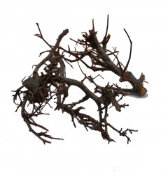 Gedroogde Bonsai takjes naturel, Iron bush,  3 takken
