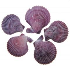 Pecan noblis, lila en paarse tinten
