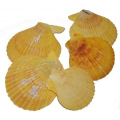 Pecan noblis, gele tinten met schakeringen