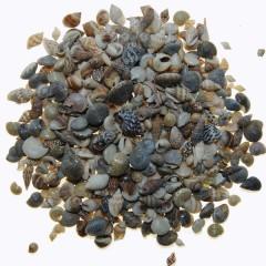 Schelpenmix mini, 100 gram