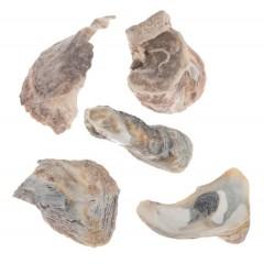 Talaba, Oester schelpen, 300 gram